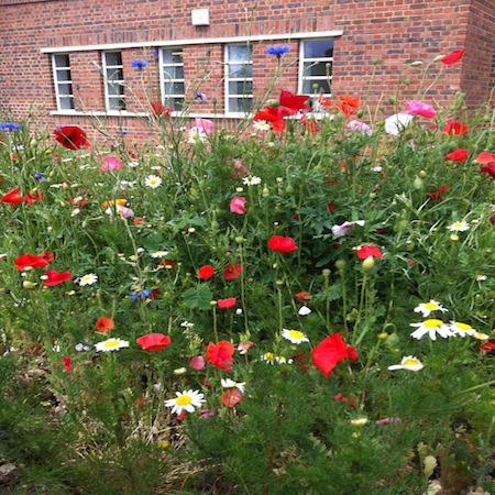 wild flowers in Brockwell park