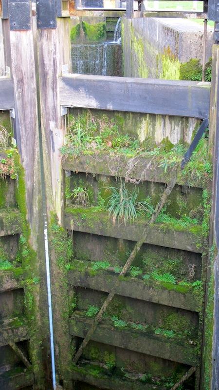 Bath's canals, Green Walls