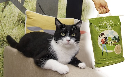 Green cat litter made in the UK