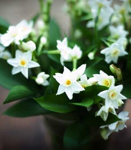 scilly white_valentines_Bluepatch_Clowance