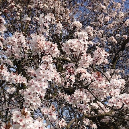 British Springtime