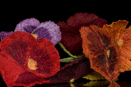 pansy detail 2011