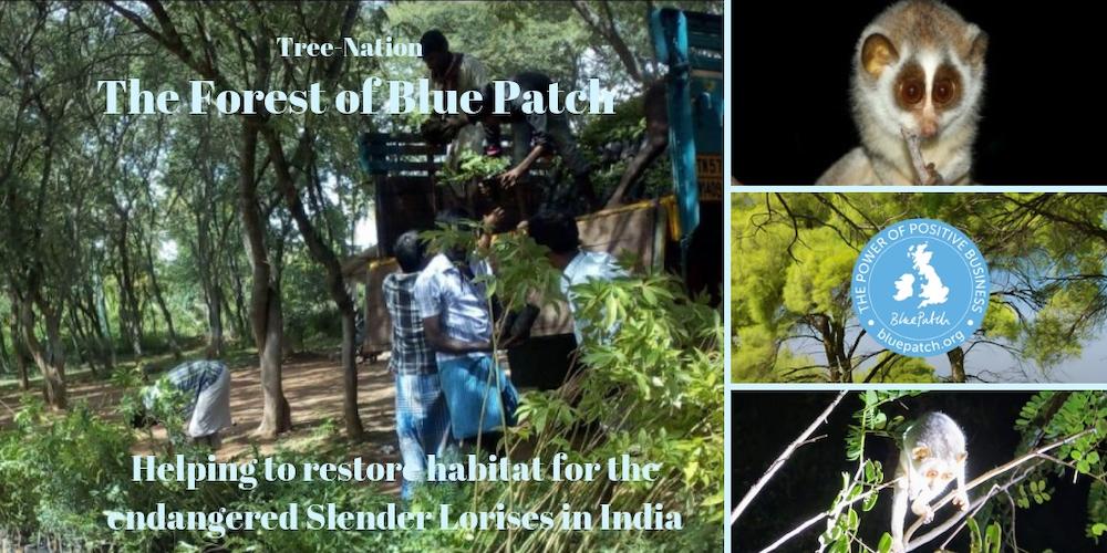 Blue Patch social enterprise