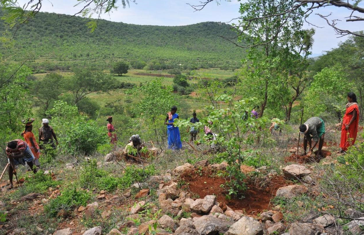 Tree the Spirit : Blue Patch plants trees in India | Bluepatch