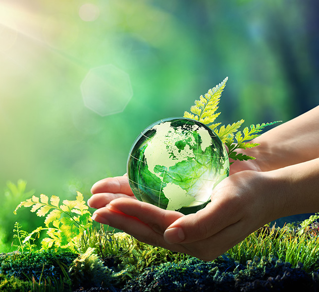 a glass ball held in hands with fern leaves to represent sustainable living