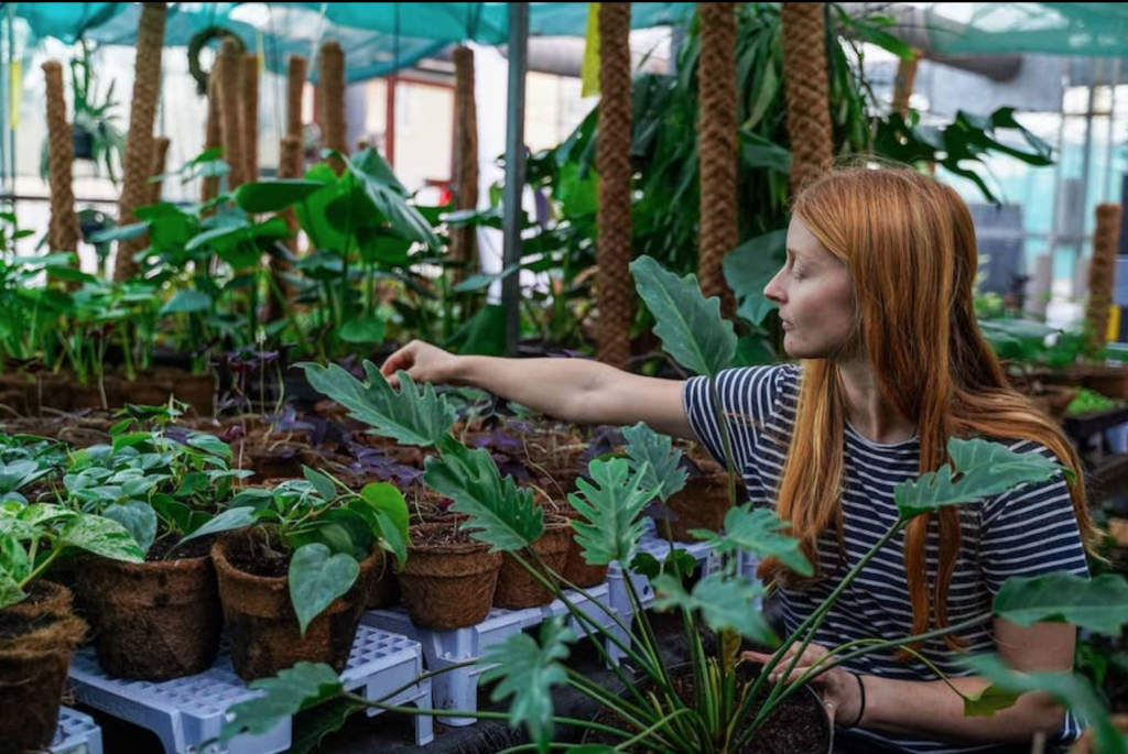 woman with long red hair and stripy shirt in a greenhouse, growing house plants